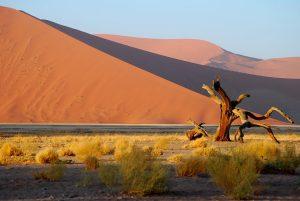 Des moments riches en découvertes durant une balade en voiture en Namibie