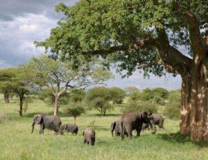 Les essentiels à savoir avant de partir en voyage en Tanzanie
